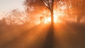 The first rays of dawn through the fog