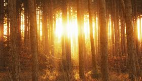 Sun shining through trees at sunrise